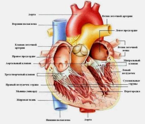 Діагностика і лікування мітрального стенозу