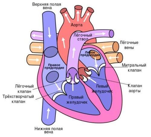Діагностика і лікування мітральної регургітації